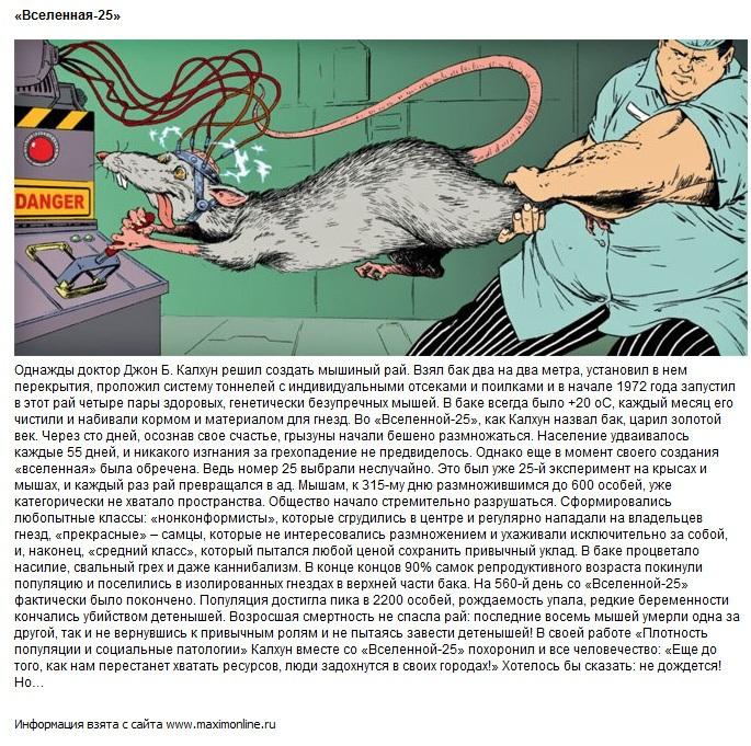 эксперимент над мышами